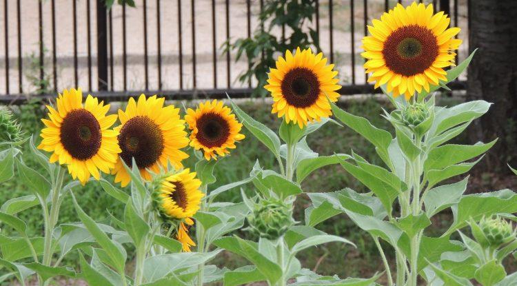 夏の花で華やかなガーデニングを楽しむ