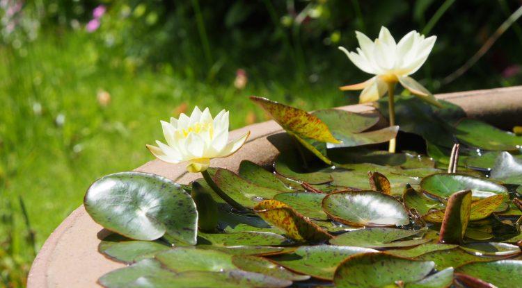 ガーデニングで欠かせない、お花が溢れるレンガの花壇!