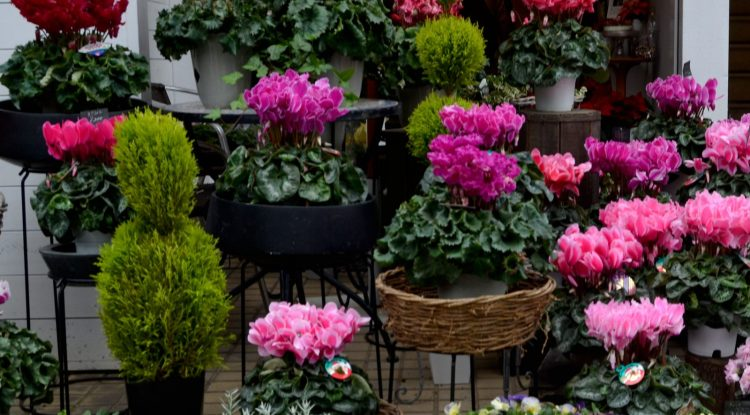 秋のガーデニングに使う植物と言ったら?