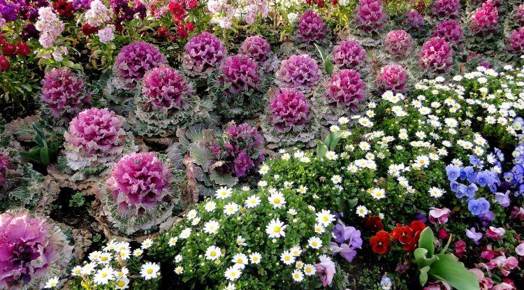 花植えでガーデニングの手間を省く